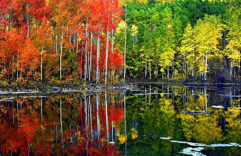 Green and red leaf trees near body of water at daytime