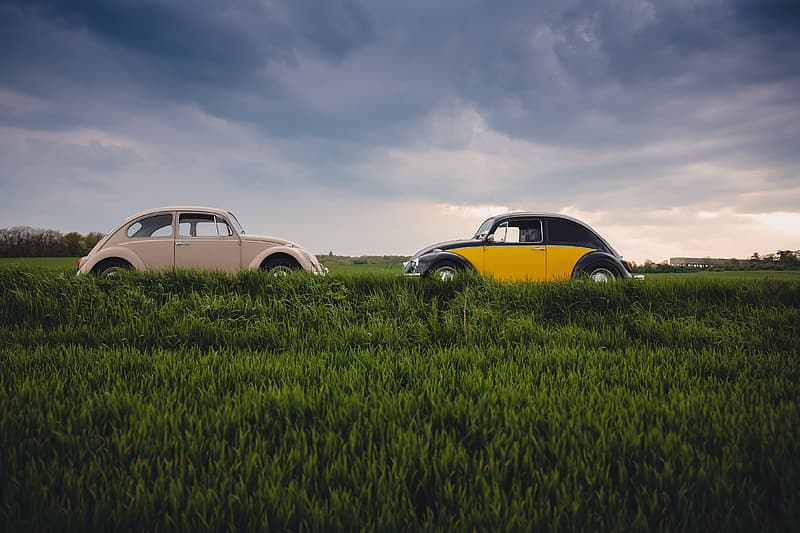 Yellow and white volkswagen beetle on green grass field under white clouds during daytime