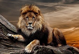 Painting of lion