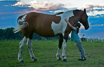 Girl in blue shirt and gray pants hugging a brown and white horse