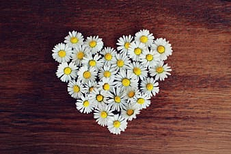 Heart-shaped white Daisy flowers on tabl