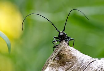 Black and white insect on brown wood