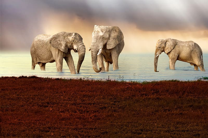 Two elephant walking on brown sand during daytime