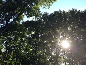 Trees with sunrays