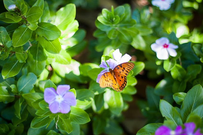 Close-up photography of gulf fritillary butterfly perching on flower