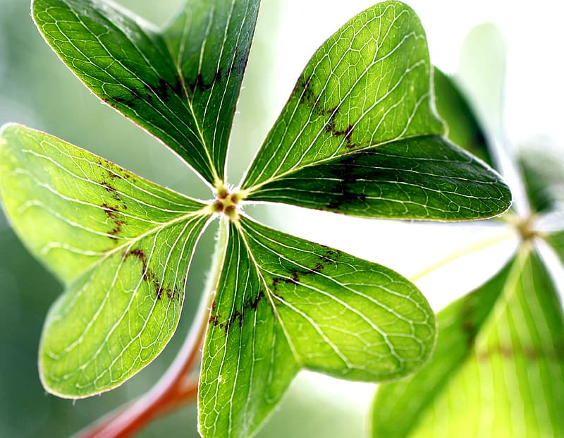 Focused photography of green leaf plant