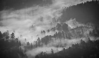 Landscape photography of foggy trees