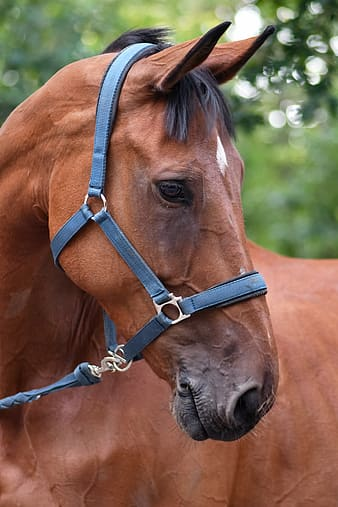 Brown horse with brown leather strap