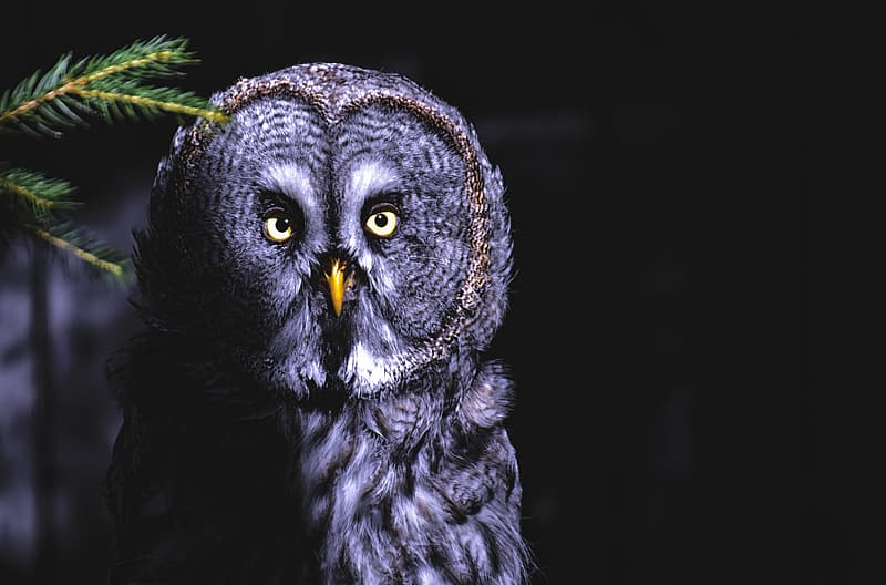 Black and white owl with black background