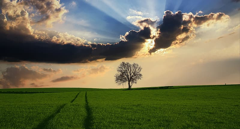 Silhouette of tree and green grass field