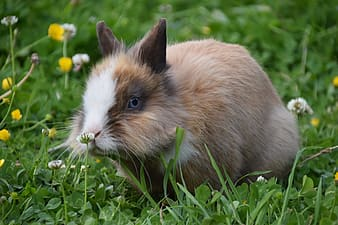 Brown and white rabbit on green grass during daytime