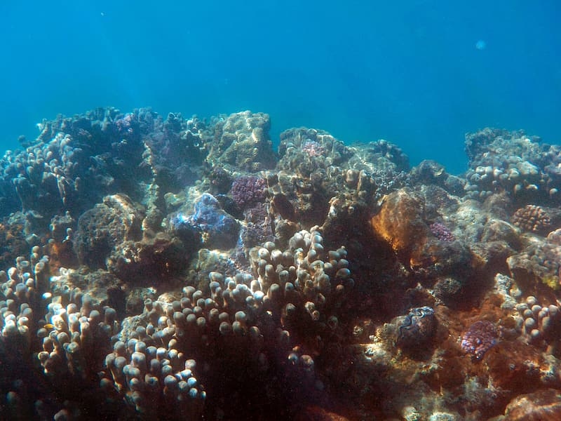 Underwater photo of sea coral
