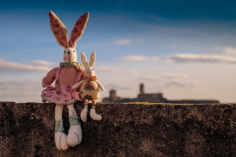 Shallow focus photography of two rabbit plush toys