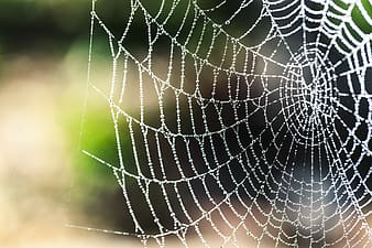 Spider web in macro photography