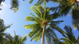High angle photography of green leaf coconut trees during day time