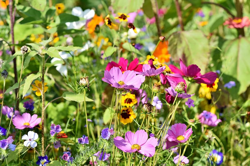 Purple and orange flowers in bloom during daytime