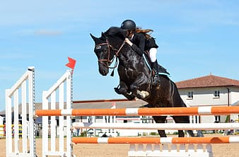 Horse jumping over poles with woman riding