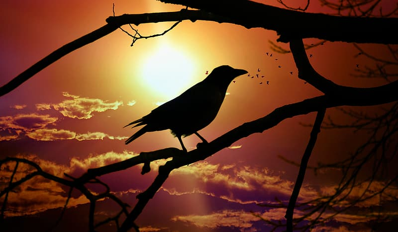 Silhouette of bird on tree branch during sunset