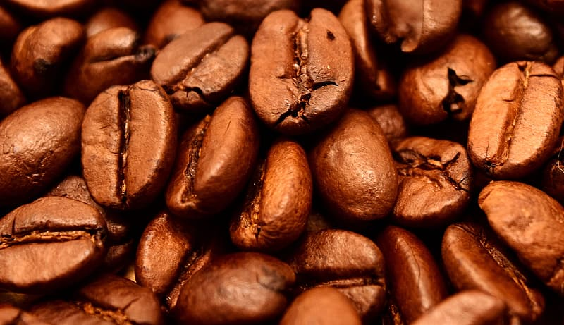 Focus photo of coffee beans