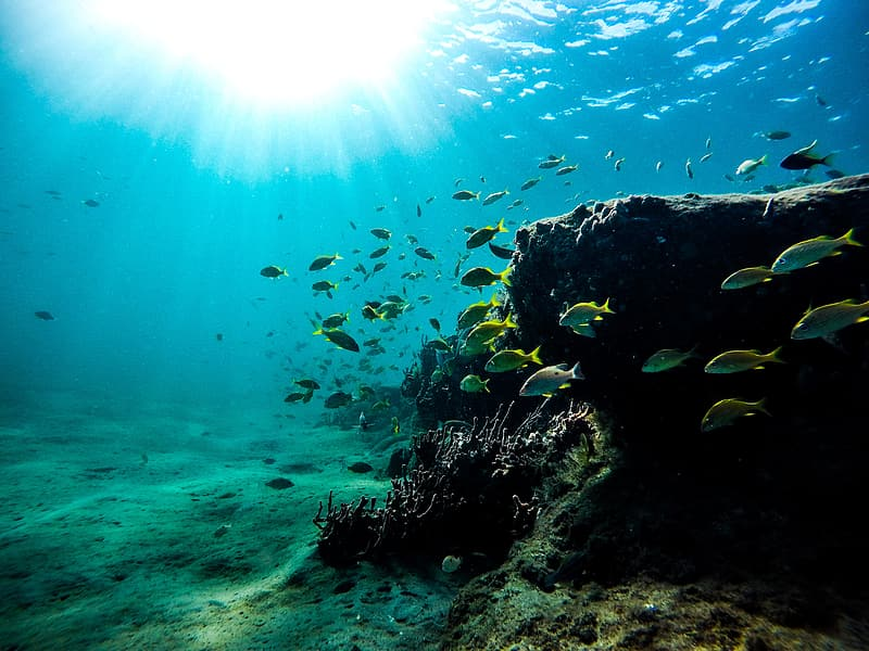 Photo of school of fishes