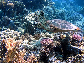 Photo of sea turtle under ocean