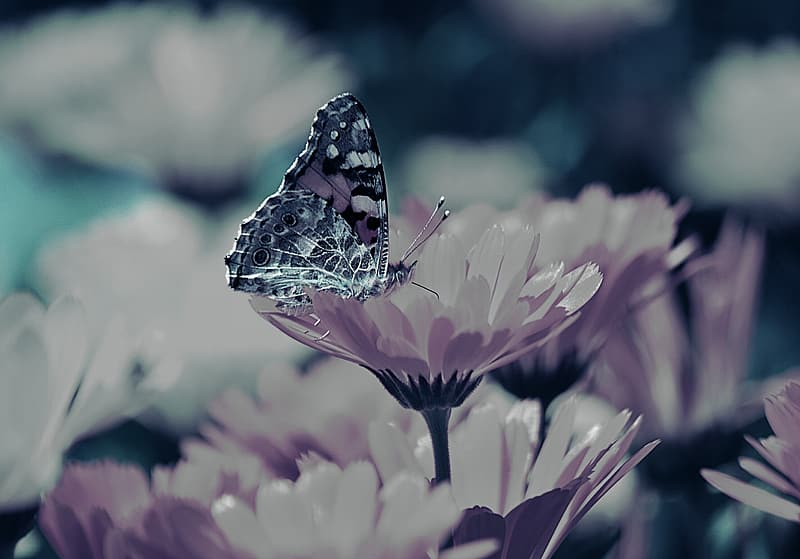 Green and purple butterfly perching on petaled flower