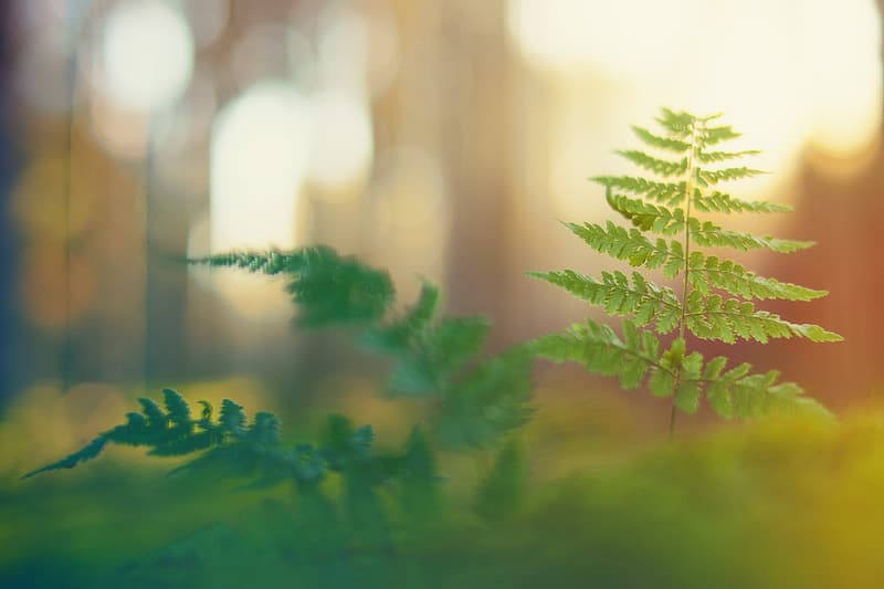 Close-up photo of green fern plant