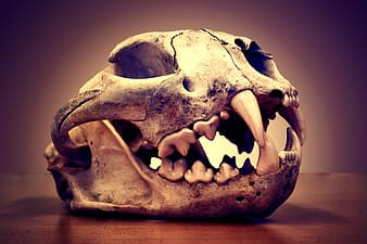 Photo of gray animal skull table decor