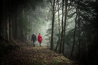 Person in red jacket walking on forest during foggy day