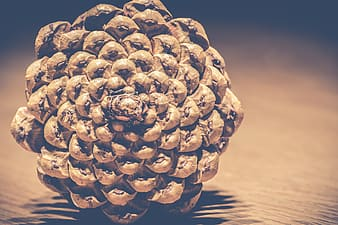 Brown and black pine cone