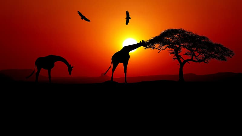 Silhouette of 2 deer on brown field during sunset