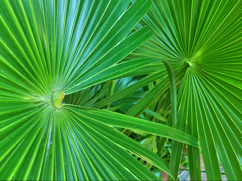 Close-up photo of linear green leafed plants