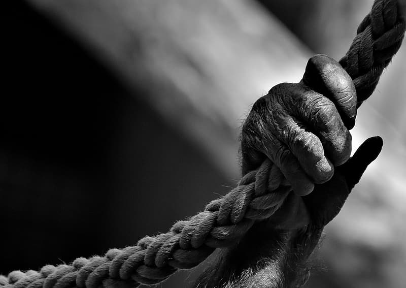 Grayscale photography of monkey's hand holding rope