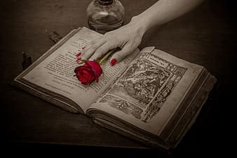 Selective color photography of person holding red rose on opened book