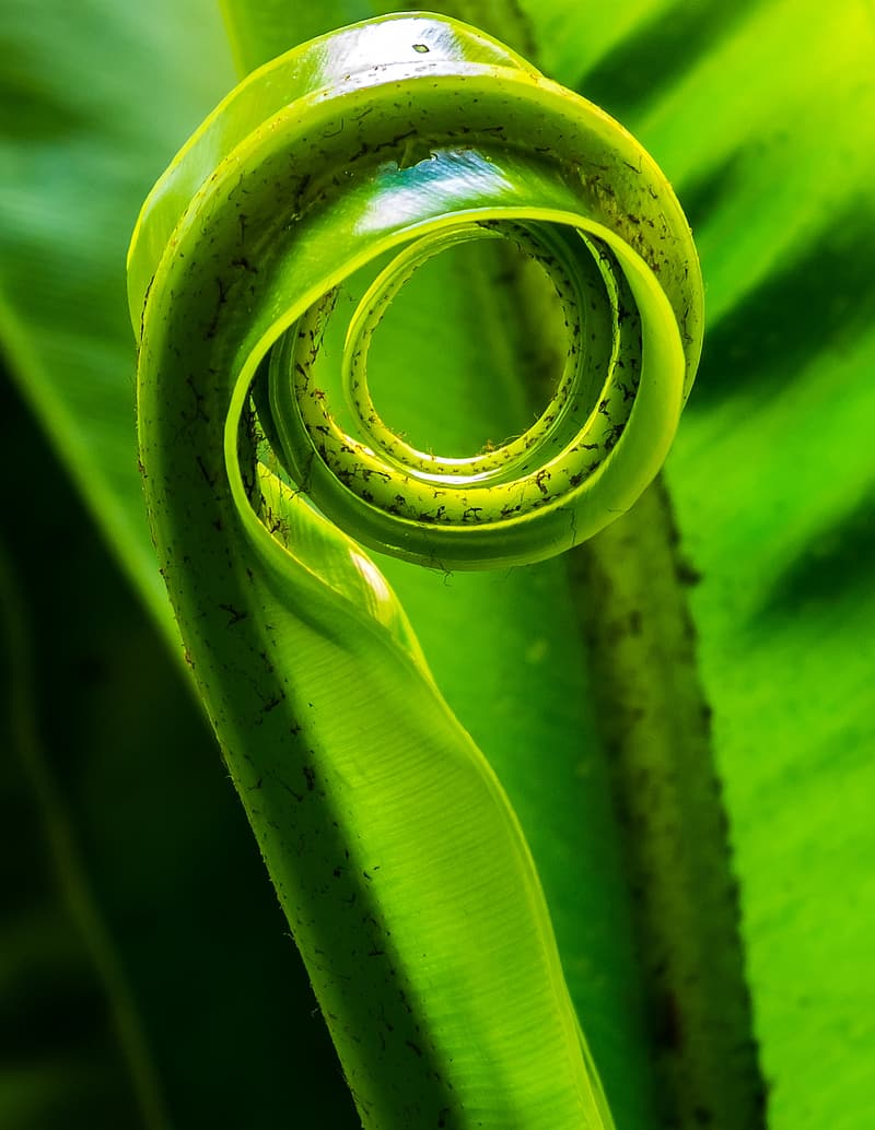 Selective focus photography of spiral green plant