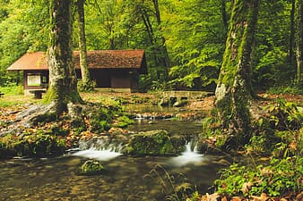Photo of streaming river in forest