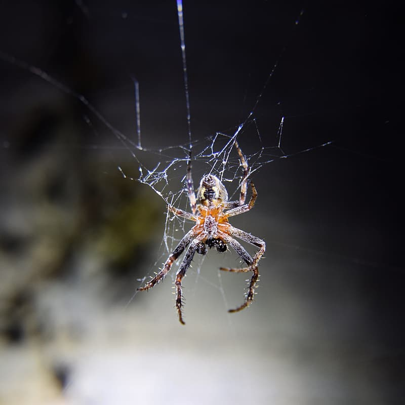 Brown spider on web in close up photography during daytime
