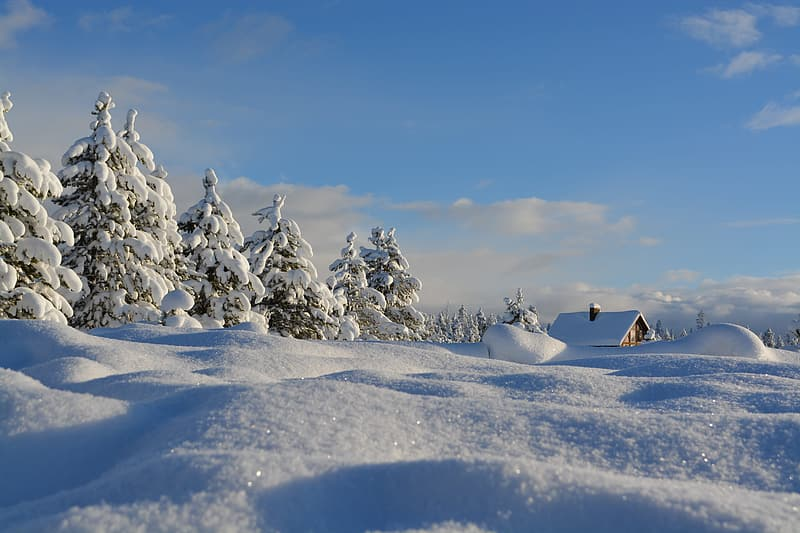 Close up of a snow field near pine trees and house