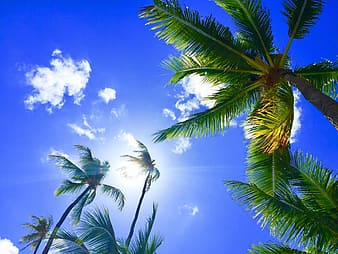 Low angle photography of coconut palm trees taken under clear sky during daytime