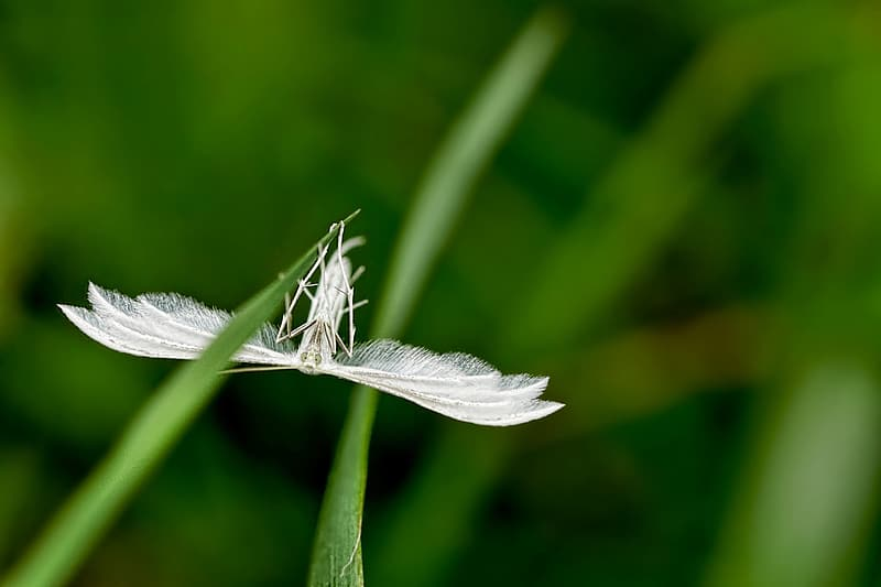White winged insect on green grass