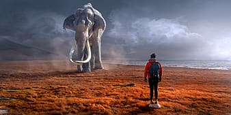 Man wearing red jacket standing in front of an gray elephant