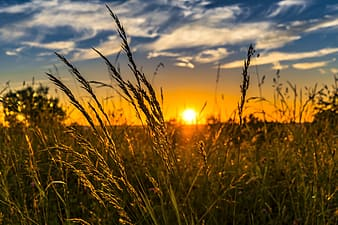 Green grass field through sunset photography