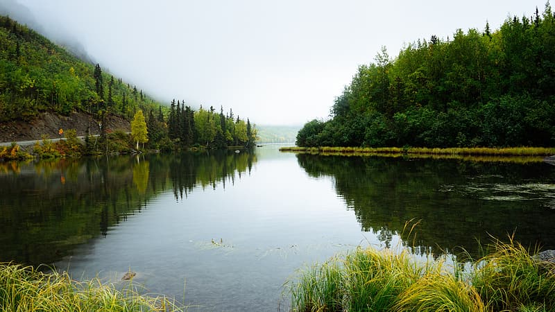 Green lake in middle of green forest