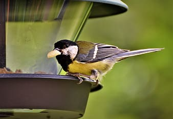 Black and yellow bird on green metal bird feeder