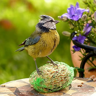 Closeup photography of black and yellow bird near purple flower