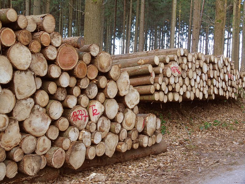 Brown wood logs on forest during daytime