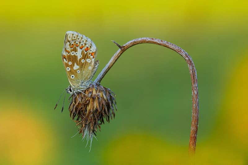 Brown and white butterfly perched on brown petaled flower in closeup photography