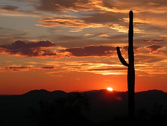 Silhouette photography of cactus and sun rise