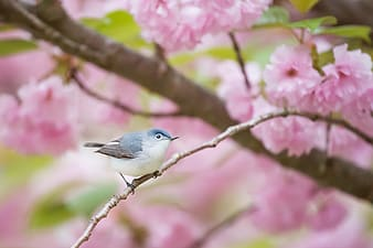 Perching white and blue bird photograph