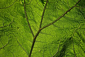 Macro shot photography of green leaf